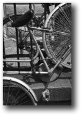 BICYCLES,<br />BOLOGNA, ITALY<br />2005